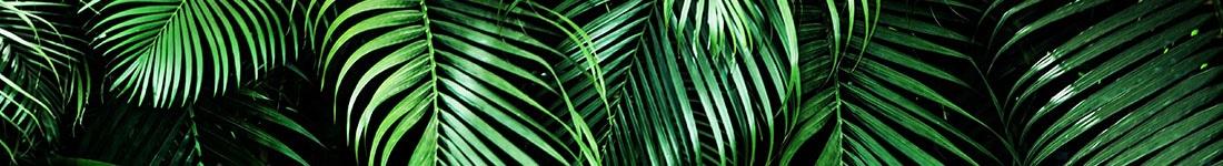 palm-bladeren