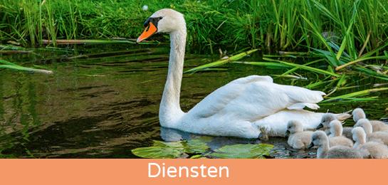 nordic swan eco label abena nederland